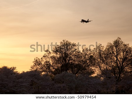 Cherry blossoms frame an airplane coming in to land at National Airport in Washington at sunset