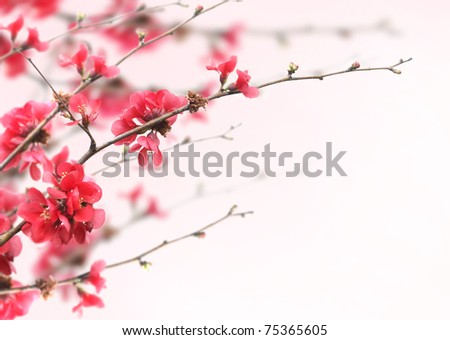 cherry blossoms frame design with copyspace