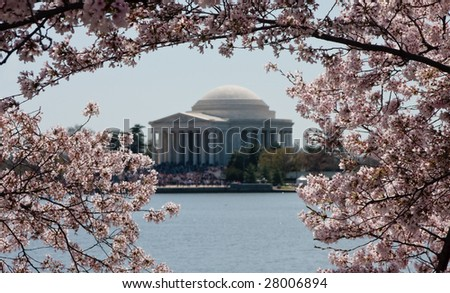 Cherry Blossoms in focus surrounding a slightly out of focus image of Jefferson Memorial