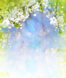 Cherry blossoms over blurred nature background/ Spring flowers/Spring Background with bokeh