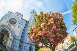 Cherry blossoms sakura near the Sacred Elizabeth's church (Blue church, 1913), Bratislava, Slovakia , fisheye