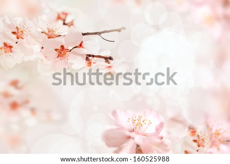 Cherry Blossoms With Lights And Bokeh