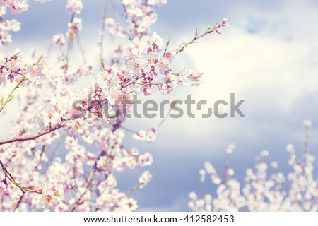 Cherry blossoms with vintage color concept - Shutterstock ID 412582453