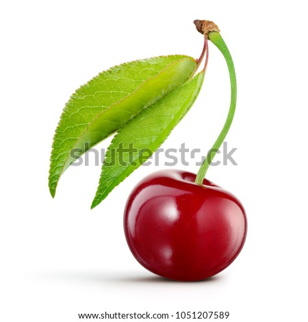 Cherry isolated. Cherry on white background. Cherry with leaves.