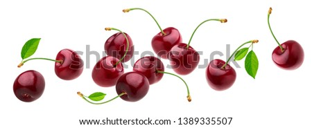 Cherry isolated on white background with clipping path, fresh cherries with stems and leaves, berry collection