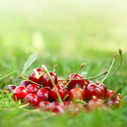Cherry lie on the grass in the garden