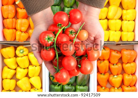 Cherry tomatoes in human hands on the colored paprika background