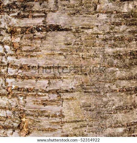 Black cherry tree bark lack cherry tree bark cherry apps directories