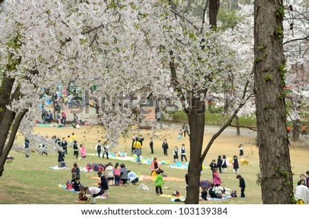 Cherry tree blossoms in the park