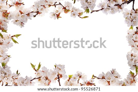 cherry-tree flowers frame isolated on white background