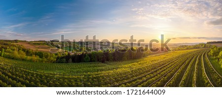 Cherry tree plantage in Upper Austria with a view of the vast fertile land
