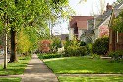 Cherry trees blooming in residential neighborhood