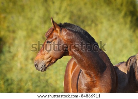 chestnut horse - stock photo