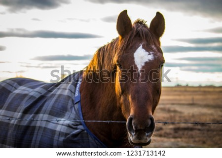 Chestnut horse amidst the dry scraggly landscape beneath a warm setting sun with warming blanket over back Stock foto ©