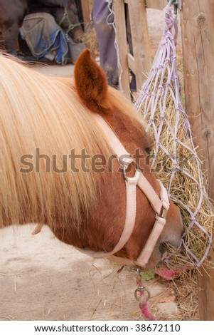 stock photo : Chestnut horse eating from a haynet on the stable yard.