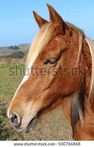 Chestnut horse in a field  #500766868