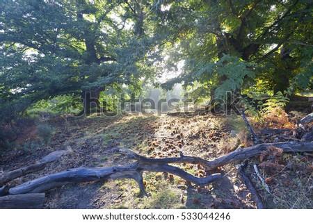Shutterstock Chestnut in El Real de San Vicente. Toledo. Castilla la Mancha. Spain. Europe.