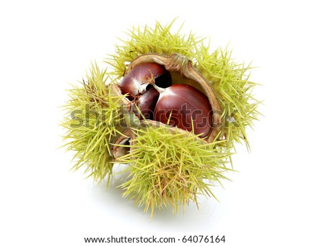 Chestnut in husk