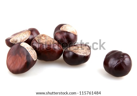 Chestnut isolated on white background.
