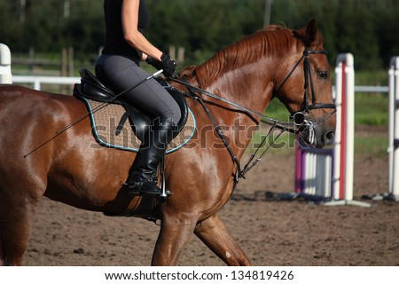 Chestnut sport horse portrait in summer with bridle