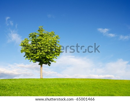 Chestnut Tree on field