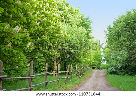 Chestnut trees along a road in rural Ukraine