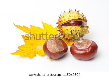 Chestnut with colorful leafs on white background