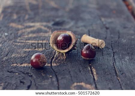 chestnuts #501572620