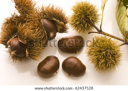 chestnuts and husks over white table