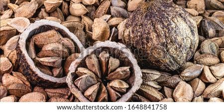 Chestnuts from Pará, also known as Brazil nuts (in Portuguese: Castanha-do-Pará or Castanha-do-Brasil) Center of Belém, Pará, northern Brazil, bolivia and Amazon rainforest. Foto stock ©