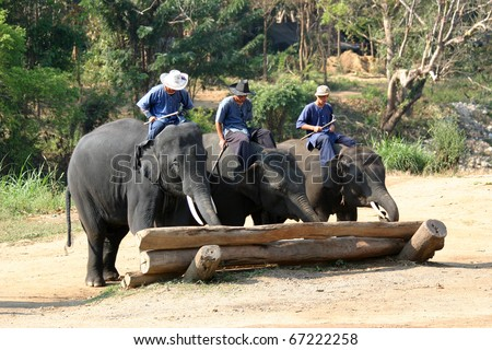 CHIANG MAI, THAILAND -  JAN. 29: Mahouts demonstrate elephants ability to move heavy logs at the Maetaman Elephant Camp on January 29, 2010 in Chiang Mai, Thailand. - stock photo