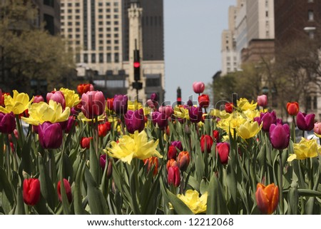 Chicago's Michigan Avenue with colorful spring tulips in bloom