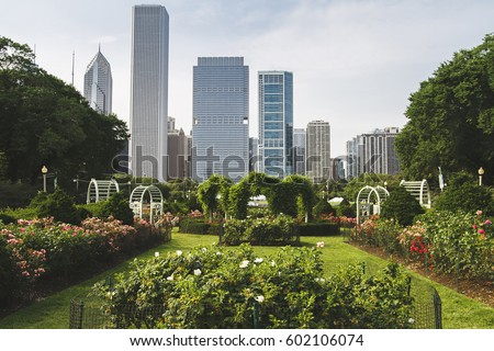 Chicago Skyline, skyscrapers in background as seen from South Rose Garden close to Buckingham Fountain. Illinous, USA. Green flower park in foreground. Summer sunny day. Colorful scene. Green city.