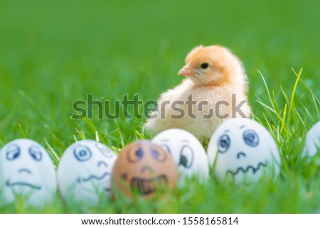 Chick and Many eggs, Many emotions were placed on green grass in beautiful sunlight. Selective focus and Copy space  #1558165814