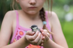 chick bird in the hand at the girl