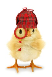 Chick detective is looking through magnifier lens conceptual photo