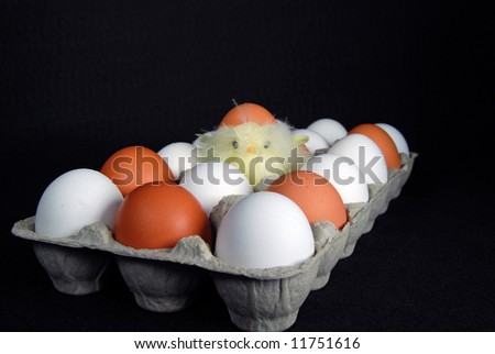 chick in egg carton