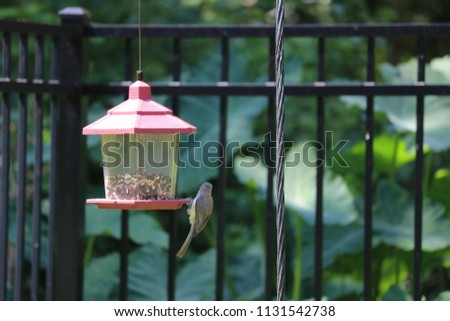 Chickadee titmouse songbird bird perched on backyard feeder.
