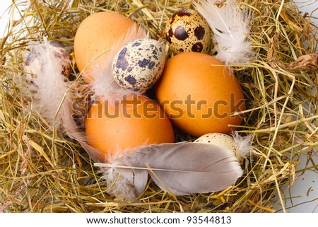 chicken and quail eggs in a nest closeup