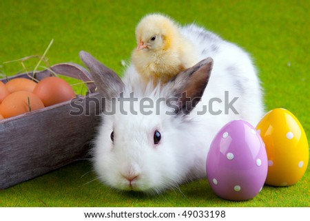 chicken, bunny rabbit and painted eggs