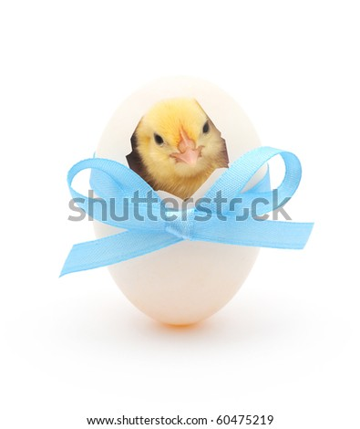 chicken coming out of a white egg