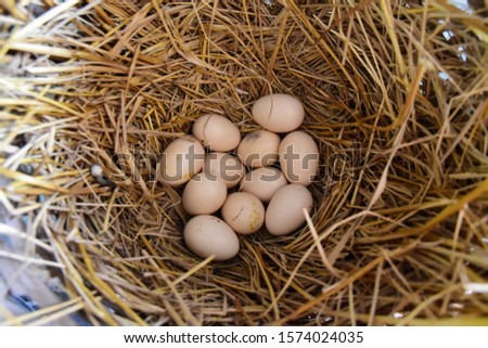 Chicken eggs in a nest made of rice straw Stok fotoğraf ©