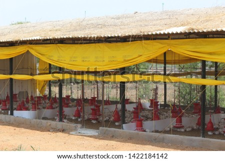 Chicken Farm Business and shelters  in India  #1422184142
