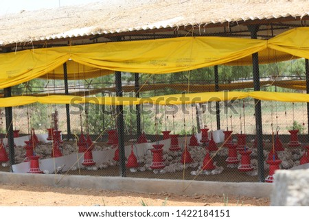 Chicken Farm Business and shelters  in India  #1422184151