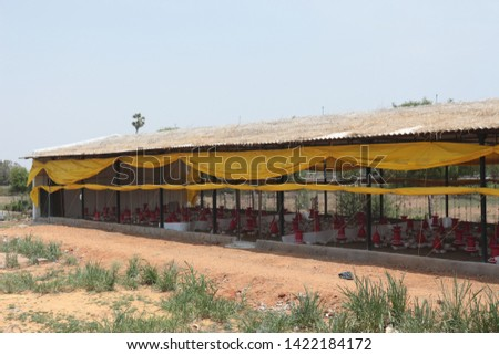 Chicken Farm Business and shelters  in India  #1422184172