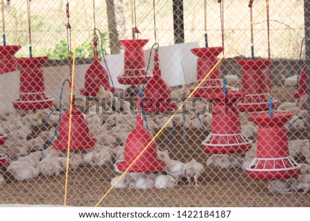Chicken Farm Business and shelters  in India  #1422184187