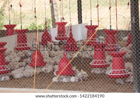 Chicken Farm Business and shelters  in India  #1422184190