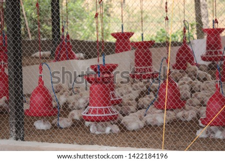 Chicken Farm Business and shelters  in India  #1422184196
