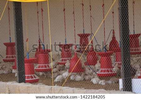 Chicken Farm Business and shelters  in India  #1422184205