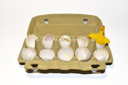 Chicken in a hen's egg among the broken empty eggs in a paperboard on white background. Broken egg and born chick. Сhicks ran away from the chicken mother. Farming and agriculture concept.